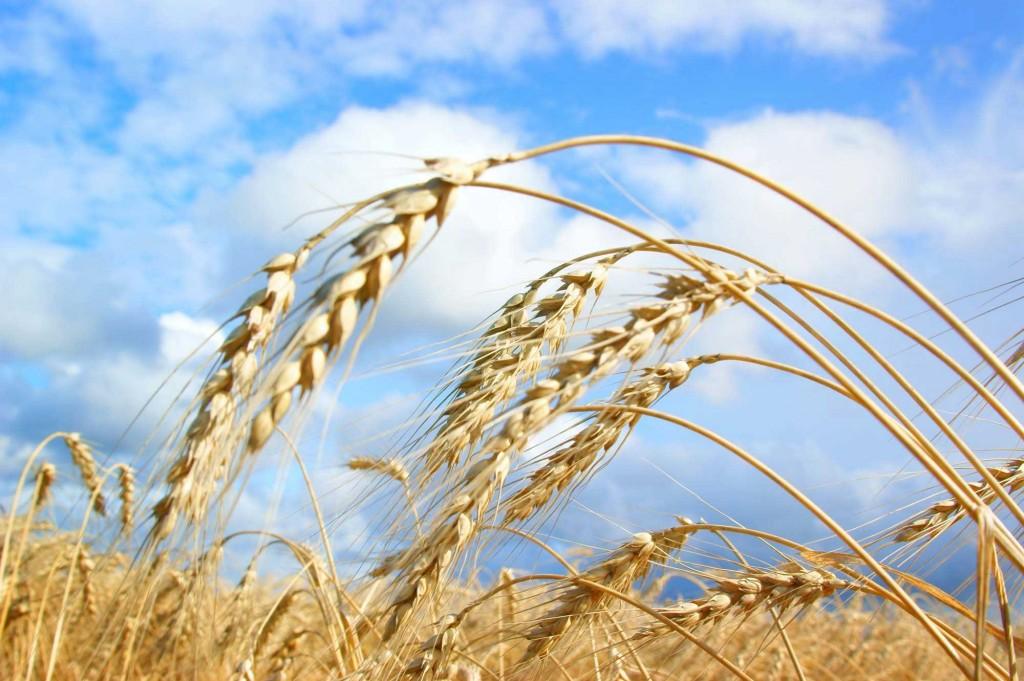 agro-biznis