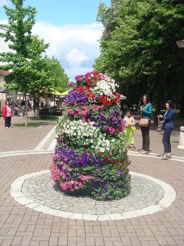 cvetna zardinjera
